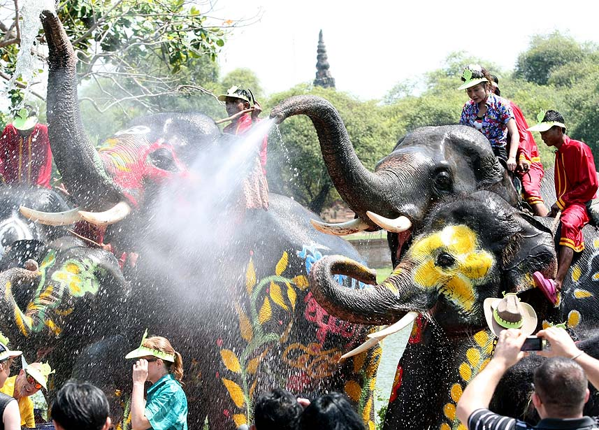 Elephant songkran in Ayutthaya