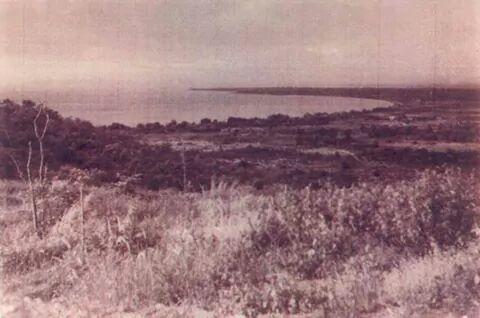 pattaya1950