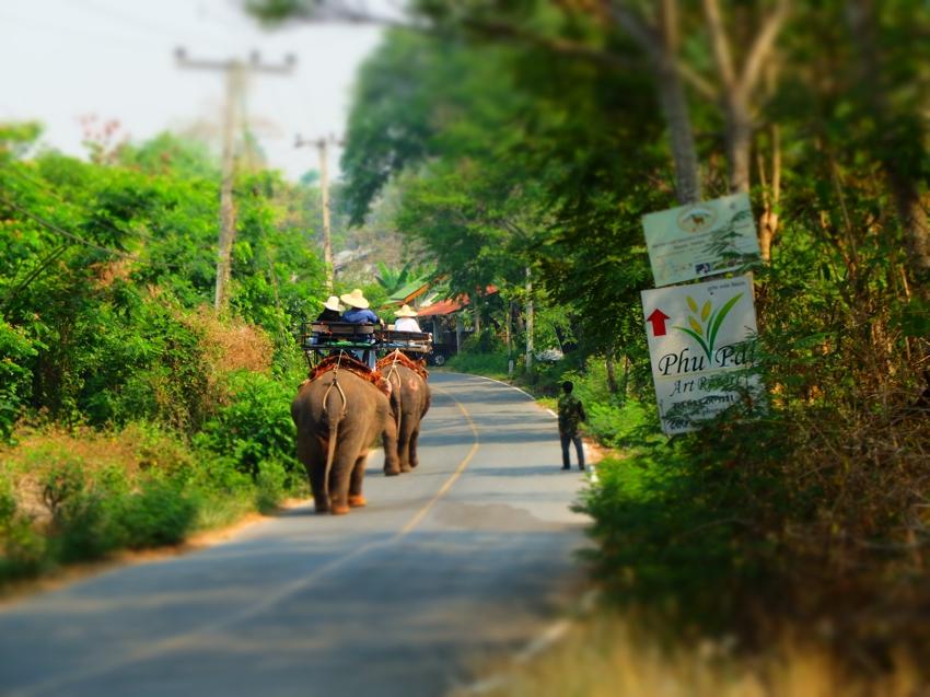 pai-elephant